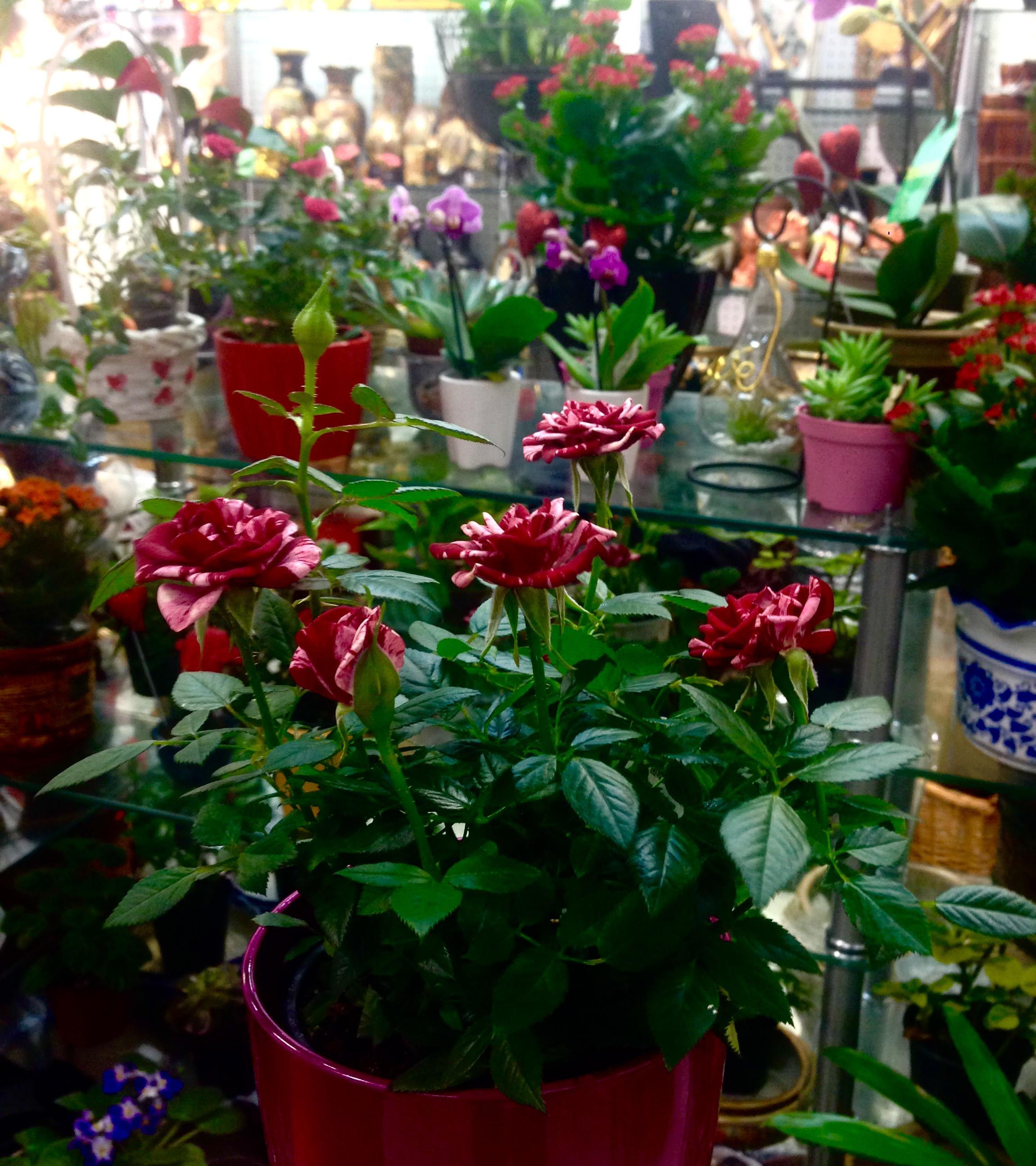 Toute nouvelle boutique de fleuriste aux Boutiques marcado